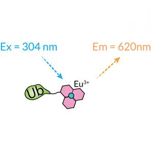 Europium-Cryptate Ubiquitin, human recombinant